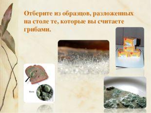 Отберите из образцов, разложенных на столе те, которые вы считаете грибами.