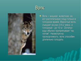 Волк Волк – хищное животное, он ест растительную пищу только в голодное время