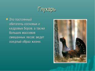 Глухарь Это постоянный обитатель сосновых и кедровых боров, а также больших м