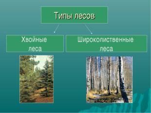 Типы лесов Хвойные леса Широколиственные леса