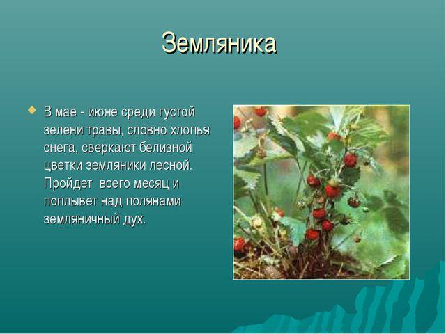 Земляника В мае - июне среди густой зелени травы, словно хлопья снега, сверка...
