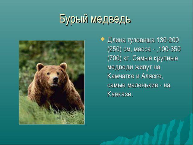 Бурый медведь Длина туловища 130-200 (250) см, масса - ,100-350 (700) кг. Сам...