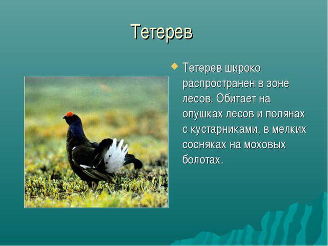 Тетерев Тетерев широко распространен в зоне лесов. Обитает на опушках лесов и...