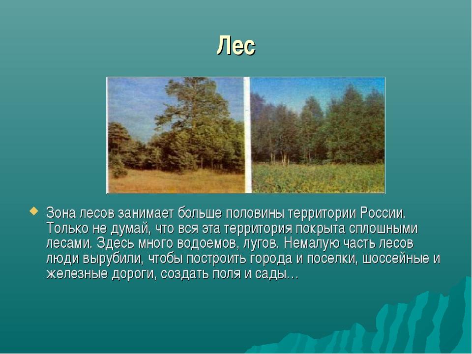 Лес Зона лесов занимает больше половины территории России. Только не думай,...