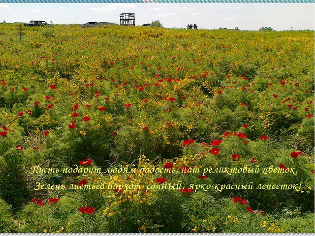 Пусть подарит людям радость, наш реликтовый цветок, Зелень листьев бархат со...