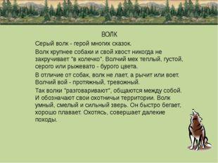 ВОЛК Серый волк - герой многих сказок. Волк крупнее собаки и свой хвост нико