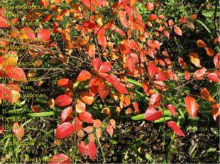 Осенний трогая Огонь, Тянул явверх Свою ладонь. Пожару осени, Как другу, Пож