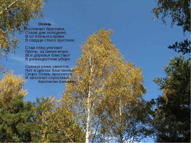 Осень Поспевает брусника, Стали дни холоднее, И от птичьего крика В сердце с...