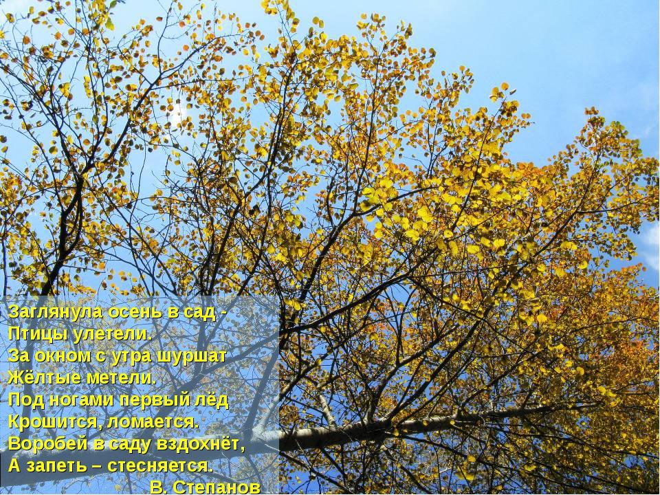 Заглянула осень в сад - Птицы улетели. За окном с утра шуршат Жёлтые метели....