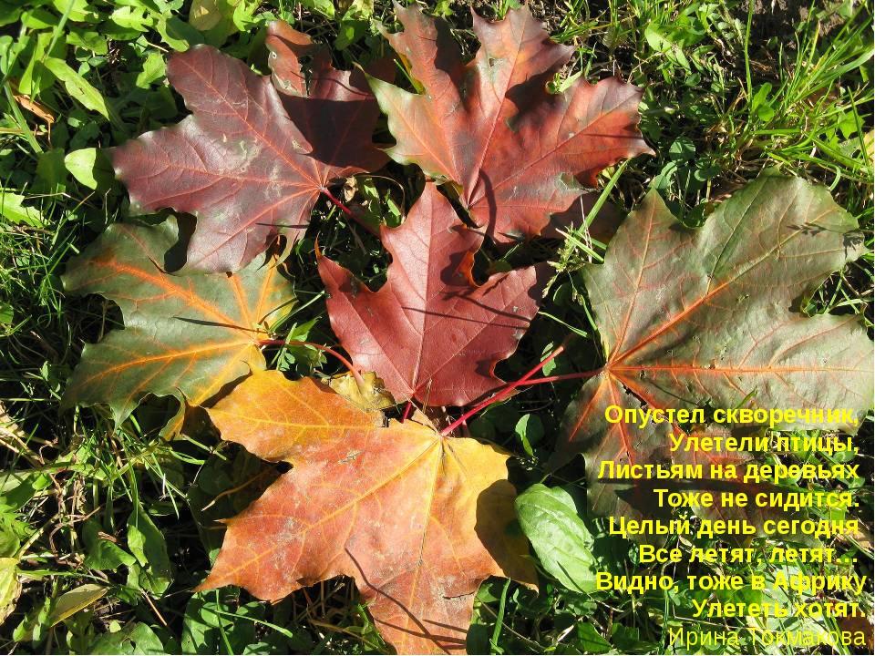 Опустел скворечник, Улетели птицы, Листьям надеревьях Тоже несидится. Целый...