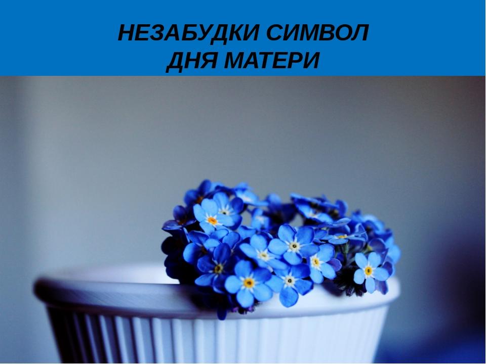 НЕЗАБУДКИ СИМВОЛ ДНЯ МАТЕРИ 10