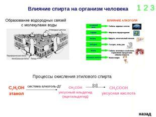 Влияние спирта на организм человека 1 2 3 назад Образование водородных связей