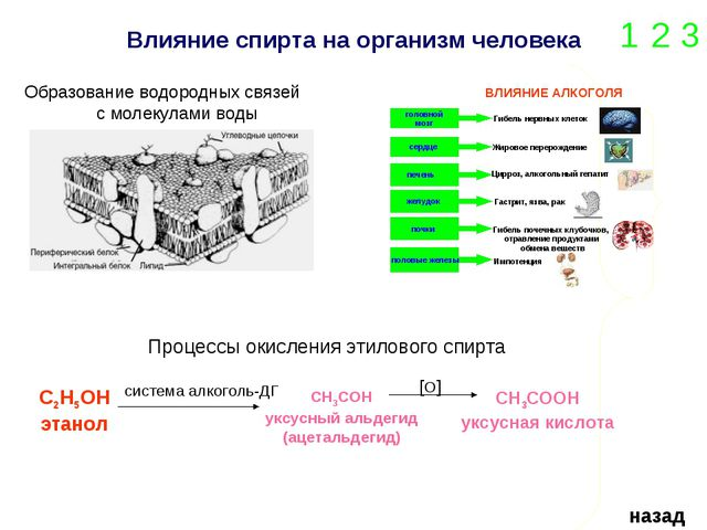Влияние спирта на организм человека 1 2 3 назад Образование водородных связей...