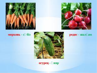 морковь - сәбіз огурец - қияр редис - шалғам