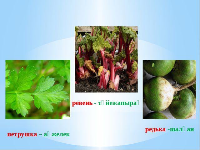 ревень - түйежапырақ петрушка – ақжелек редька -шалқан