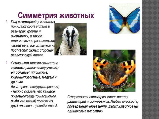 Симметрия животных Под симметрией у животных понимают соответствие в размерах...