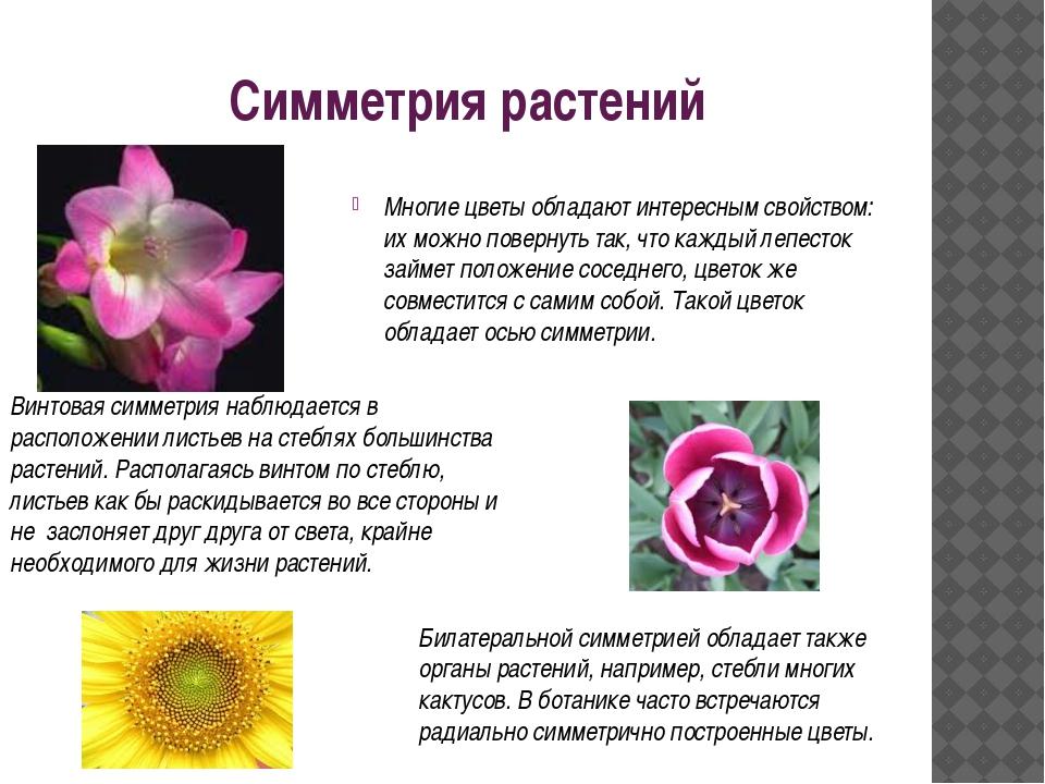 Симметрия растений Многие цветы обладают интересным свойством: их можно повер...