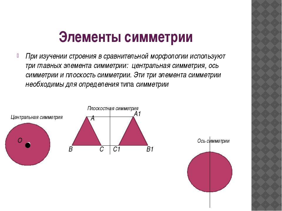 Элементы симметрии При изучении строения в сравнительной морфологии использую...