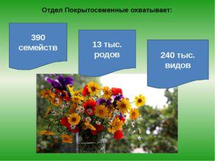 Отдел Покрытосеменные охватывает: 390 семейств 13 тыс. родов 240 тыс. видов