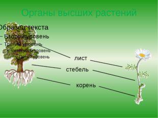 Органы высших растений лист стебель корень