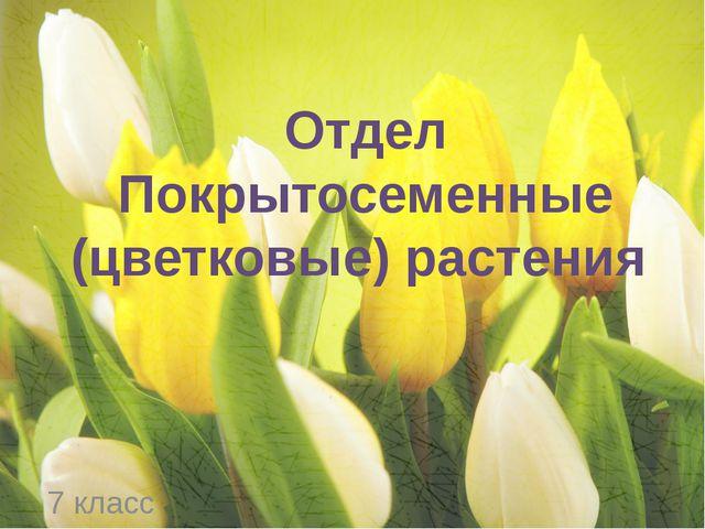 Отдел Покрытосеменные (цветковые) растения 7 класс