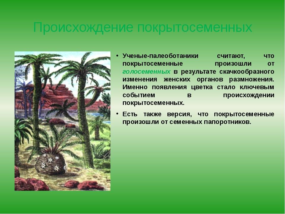 Происхождение покрытосеменных Ученые-палеоботаники считают, что покрытосеменн...