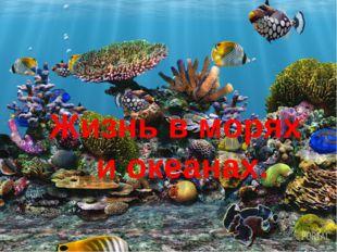 Жизнь в морях и океанах.