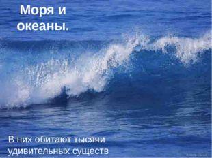 Моря и океаны. В них обитают тысячи удивительных существ