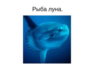 Рыба луна.