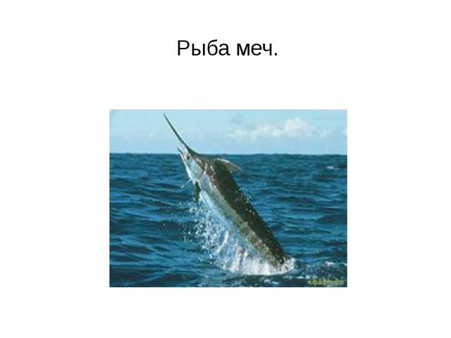 Рыба меч.