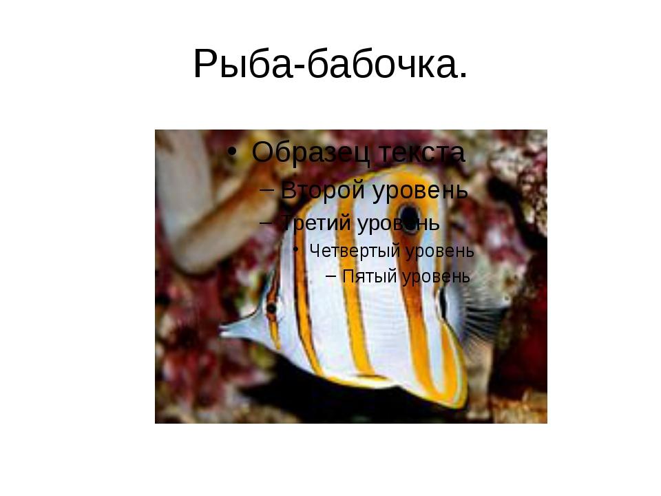 Рыба-бабочка.