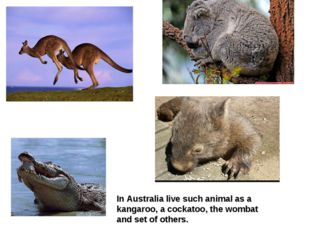 In Australia live such animal as a kangaroo, a cockatoo, the wombat and set o
