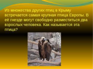 Из множества других птиц в Крыму встречается самая крупная птица Европы. В её