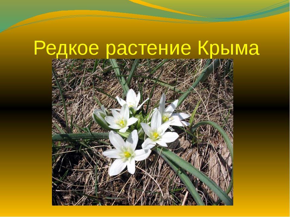 Редкое растение Крыма