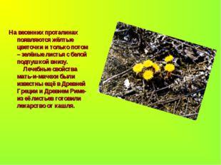 На весенних проталинах появляются жёлтые цветочки и только потом – зелёные ли