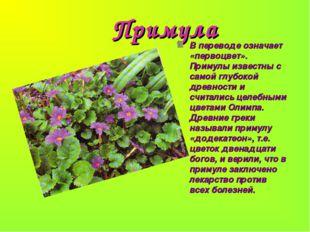 Примула В переводе означает «первоцвет». Примулы известны с самой глубокой д