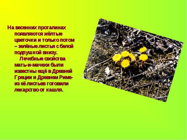 На весенних проталинах появляются жёлтые цветочки и только потом – зелёные ли...