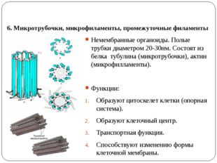6. Микротрубочки, микрофиламенты, промежуточные филаменты Немембранные органо