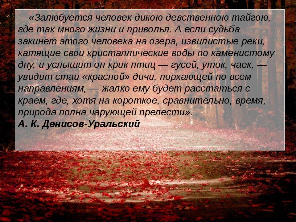 «Залюбуется человек дикою девственною тайгою, где так много жизни и приволья...