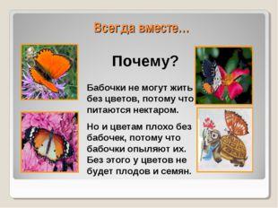 Всегда вместе… Бабочки не могут жить без цветов, потому что питаются нектаром