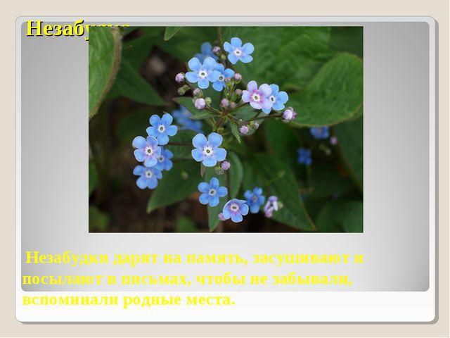 Незабудка Незабудки дарят на память, засушивают и посылают в письмах, чтобы н...