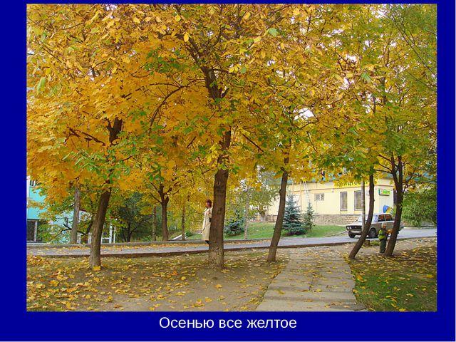 Осенью все желтое