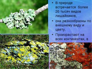В природе встречается более 26 тысяч видов лишайников, они разнообразны по вн