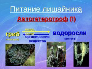 Питание лишайника Автогетеротроф (!) гриб водоросли вода, соли органические в