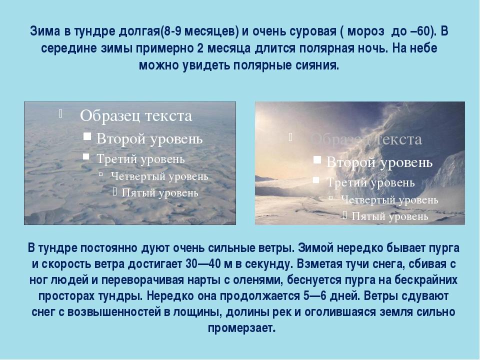 Зима в тундре долгая(8-9 месяцев) и очень суровая ( мороз до –60). В середине...