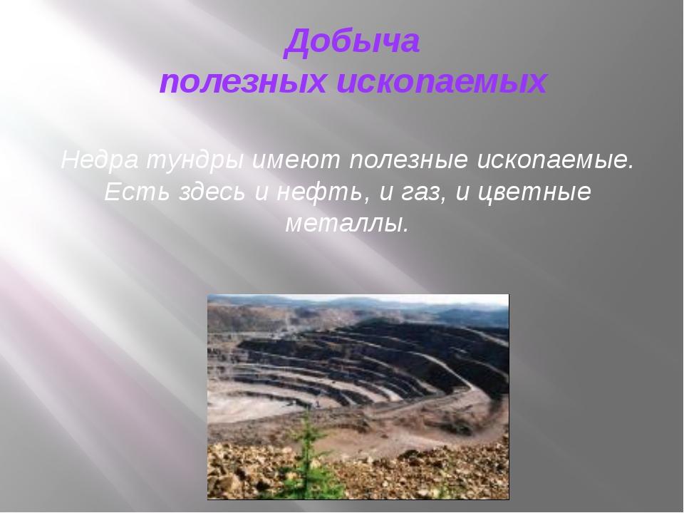 Недра тундры имеют полезные ископаемые. Есть здесь и нефть, и газ, и цветные...