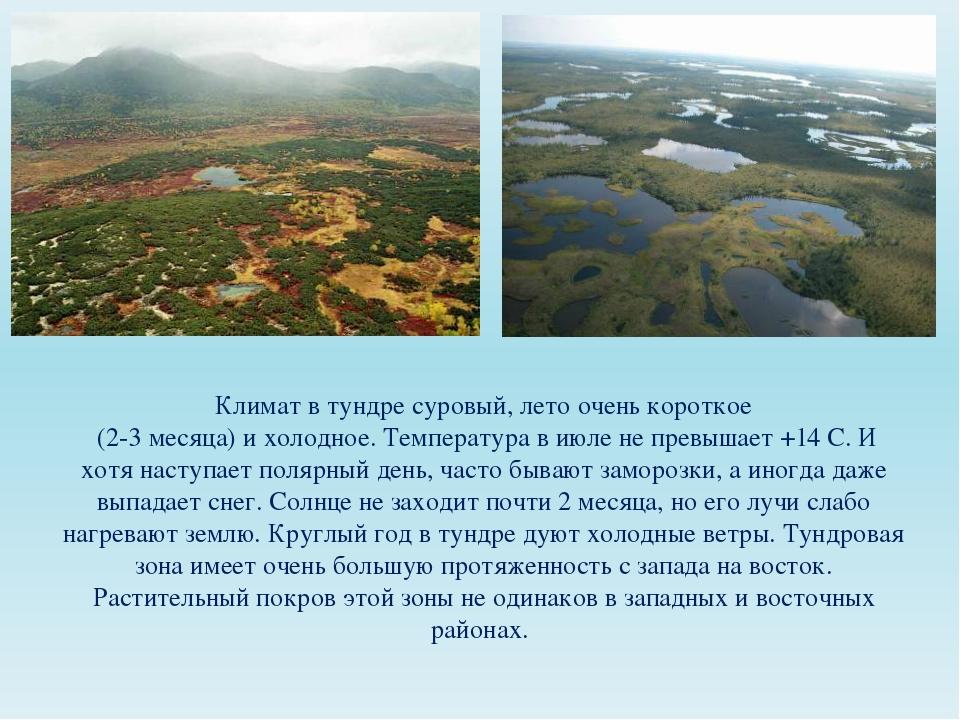 Климат в тундре суровый, лето очень короткое (2-3 месяца) и холодное. Темпера...
