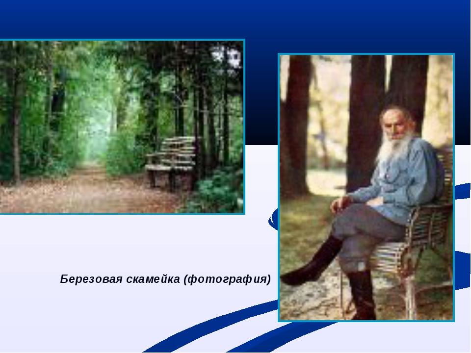 Березовая скамейка (фотография)