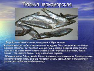 Тюлька черноморская Второй по численности вид сельдевых в Чёрном море. Эта пе