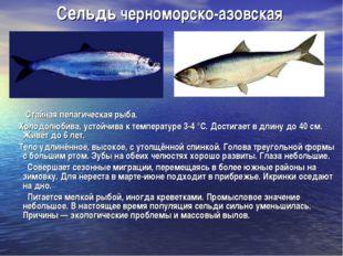 Сельдь черноморско-азовская Стайная пелагическая рыба. Холодолюбива, устойчив
